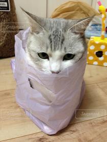 猫,プレゼント,袋,猫三昧