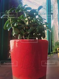 室内装飾,緑,植物,赤,窓,植木鉢,窓辺,観葉植物,窓際,多肉植物