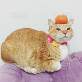 猫,お正月,cat,謹賀新年,鏡餅,鏡もち,茶トラ男子,茶トラ白,鏡もち猫,鏡餅猫