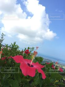 空,花,夏,南国,赤,雲,ハイビスカス,沖縄,夏休み