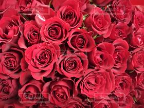 花,赤,花束,バラ,プレゼント,薔薇