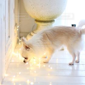 犬,かわいい,ライトアップ