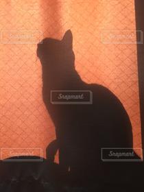 猫,猫が好き,影