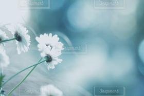 花,植物,白,きれい