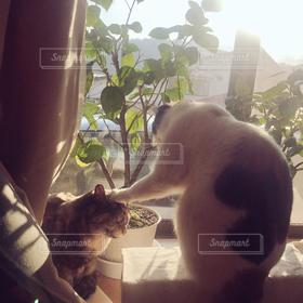 猫,ハイビスカス,朝陽