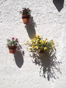 花,植物,白,影,植木鉢,白壁