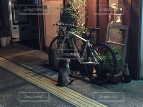 猫,カフェ,自転車,バイク,居酒屋