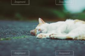 猫,風景,かわいい,道路,寝顔
