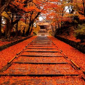 自然,風景,秋,紅葉,階段,落ち葉,敷き紅葉