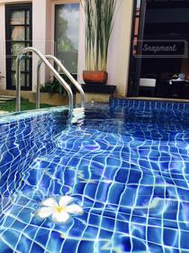 花,プール,水,タイ,プーケット,リゾート,休暇,ヴィラ,浮かぶ