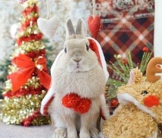 動物,うさぎ,かわいい,ペット,兎,クリスマス