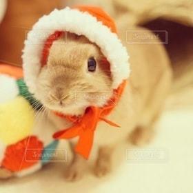 動物,うさぎ,ペット,兎,クリスマス