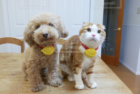 犬,猫,2匹,ペット