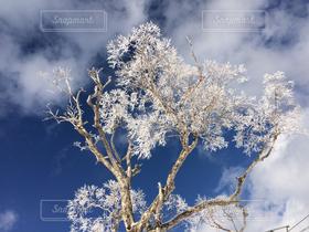 自然,空,冬,木,雪,雲,樹木,スキー場,雪化粧