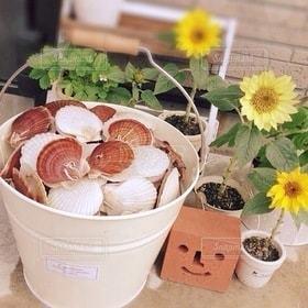 植物,ひまわり,スマイル,バケツ,レンガ,向日葵,貝,ホタテ,帆立