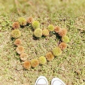 自然,公園,秋,芝生,屋外,緑,足元,足,栗,ハート,秋色,イガグリ