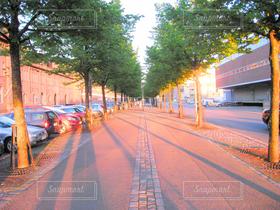 夕日,木,海外,夕焼け,道路,夕方,ヨーロッパ,影,観光,道,旅行,旅,並木道,北欧,海外旅行,通り,フィンランド,ヘルシンキ