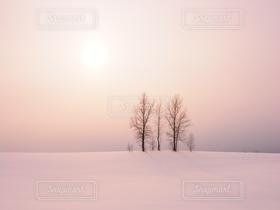 冬,雪,北海道,雪景色,美瑛