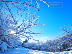 冬,雪,京都,青空,雪景色,蹴上インクライン,冬晴れ,蹴上