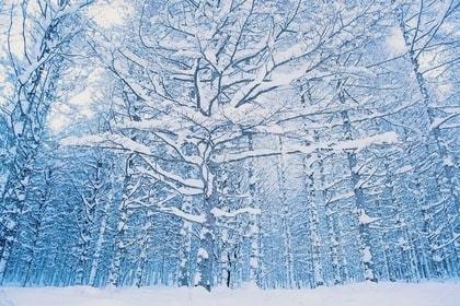 自然,風景,アウトドア,冬,絶景,芝生,雪,屋外,森,植物,静寂,枝,幻想的,アート,冬景色,枯れ木,林,雪景色,雪原,大自然,見上げる,樹木,枯れた植物,外,冬枯れ,神秘的,立つ