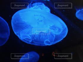 海,青,水,透明,幻想的,水族館,ふわふわ,水中,癒し,ブルー,闇,クラゲ,アクアリウム,くらげ,クラゲhappybirdシリーズ