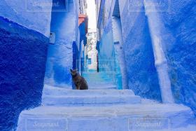 猫,インテリア,海外,青,観光,雑貨,ブルー,モロッコ