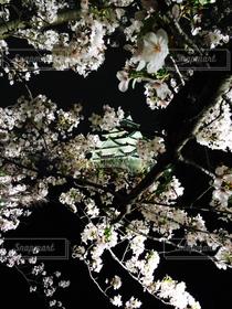 桜,夜景,大阪,城,夜桜,ライトアップ,大阪城