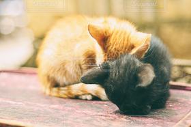 猫,にゃんこ,カップル,かわいい,2匹,ねこ,子猫,小さい,クロネコ,ミケ,ちゃいろ
