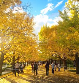 空,秋,紅葉,青空,散歩,銀杏,休日,穏やかな時間
