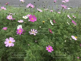 花,きれい