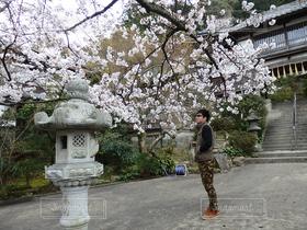 春,桜,男,お寺,不釣合い