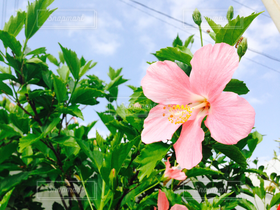 自然,海,空,公園,花,ハイビスカス,沖縄,沖縄で見つけた絶景