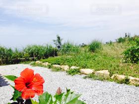 自然,風景,海,空,公園,花,ハイビスカス,沖縄,沖縄で見つけた絶景