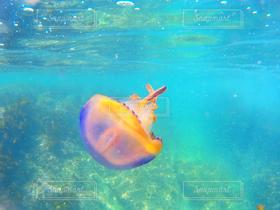 自然,海,夏,クラゲ,海の中
