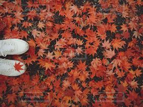 1人,自然,公園,秋,紅葉,かわいい,スニーカー,おしゃれ