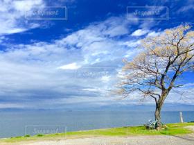 自然,風景,海,空,自転車,木,湖,青,琵琶湖