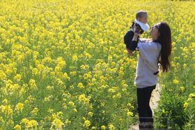 女性,子ども,親子,菜の花,旅行,菜の花畑,母子