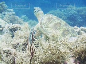 自然,海,夏,ダイビング,亀,海の中